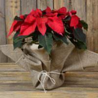 Красные цветы в горшке с декором из мешковины
