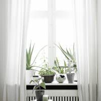 Комнатные растения на белом подоконнике