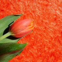 Цветок тюльпана на фоне красных жидких обоев