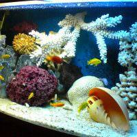 Морская ракушка за стеклом аквариума