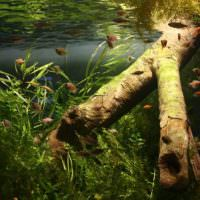 Старая коряга в прямоугольном аквариуме