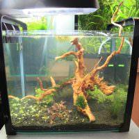 Корни дерева в оформление аквариума