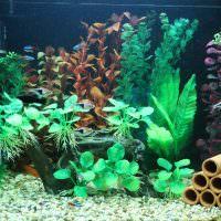 Украшение аквариума с помощью водных растений