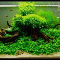 Украшение аквариума корягами из леса