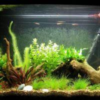 Большая коряга на дне аквариума