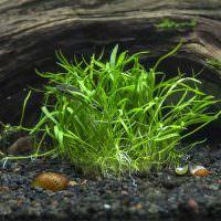 Мелкие водоросли под старой корягой