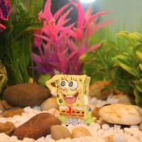 Оформление аквариума в детской комнате