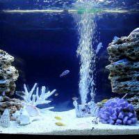 Пузырьки воздуха от аквариумного фильтра