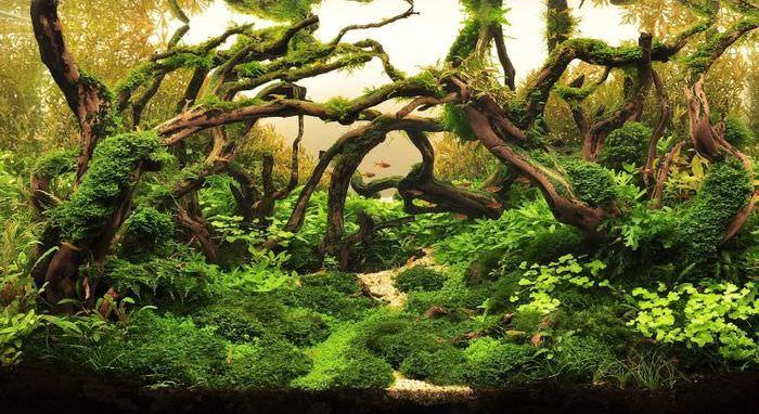 Оформление аквариума корнями и водорослями