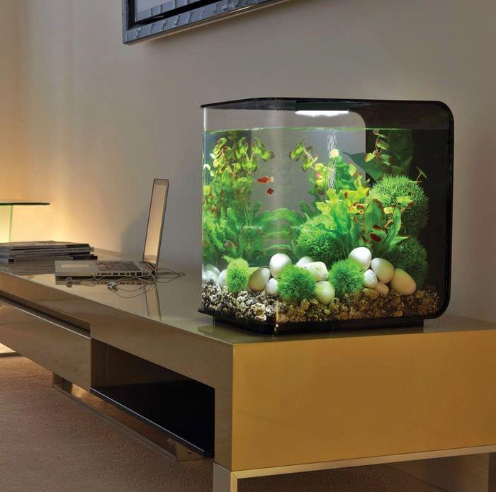 Небольшой квадратный аквариум на рабочем столе