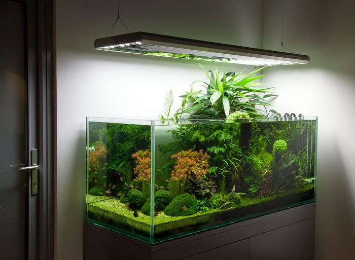Светодиодная подсветка над прямоугольным аквариумом