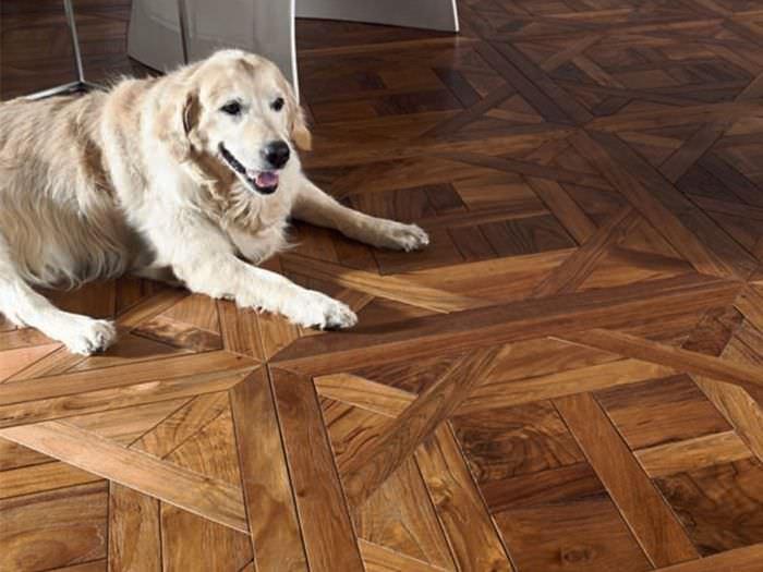 Собака на паркетном полу из модульных щитов
