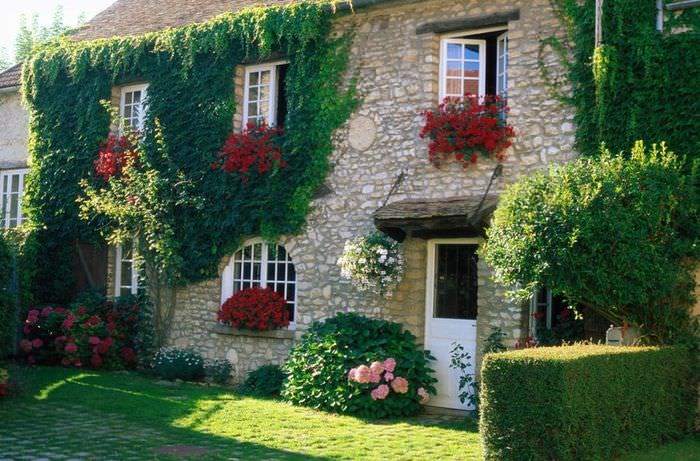 Девичий виноград на фасаде загородного дома