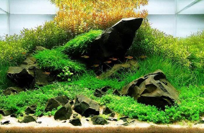 Декор аквариума в стиле ивагуми