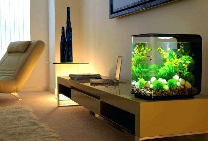 Небольшой аквариум на рабочем столе