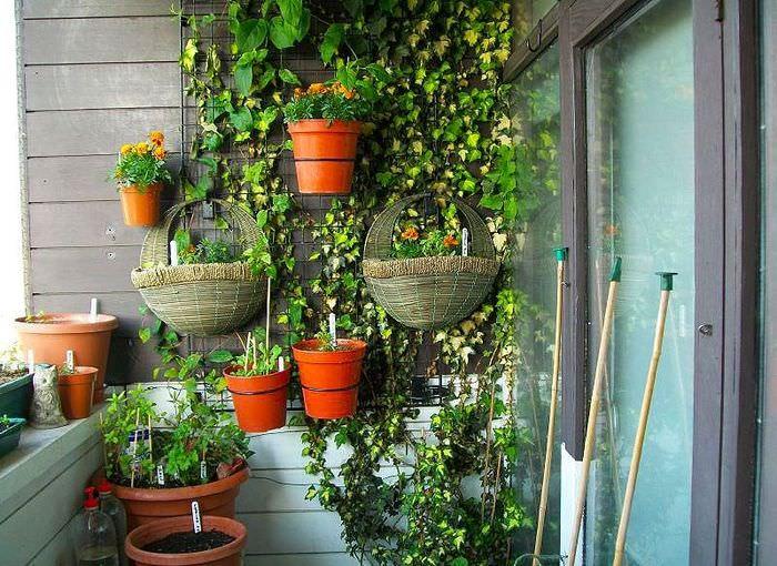 Подвесные горшки с комнатными растениями на стене балкона