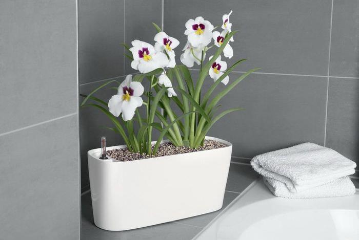 Небольшой горшочек с цветами в интерьере ванной