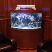 Угловой аквариум на деревянной тумбочке