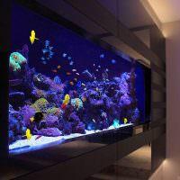 Водный мир домашнего аквариума