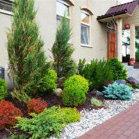 Миксбордер с хвойными растениями перед окнами дома