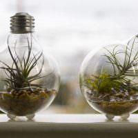 Комнатные растения в старой лампочке