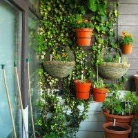 Вьющиеся растения в горшках на деревянной стене