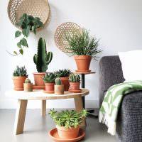 Коллекция кактусов в интерьере комнаты