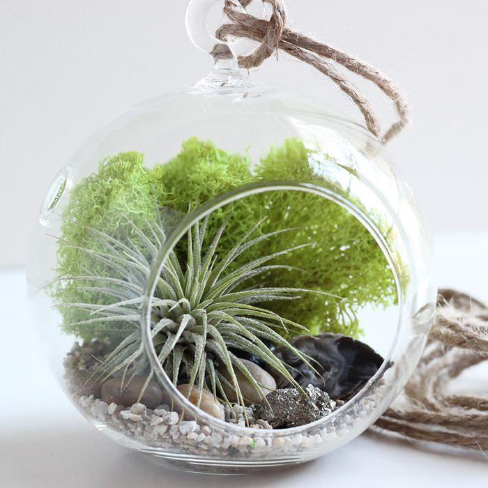 Фото маленького флорариума с живыми растениями