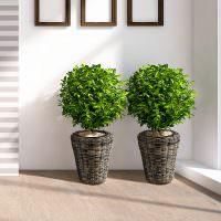 Плетенные горшки с живыми растениями