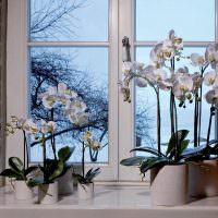 Белые орхидеи на пластиковом подоконнике