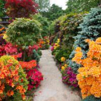 Декоративные кустарники с оранжевыми листьями