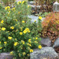 Каменные валуны в ландшафте сада