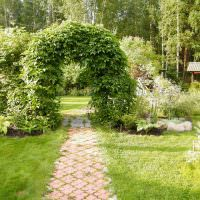 Арка с лианами над садовой дорожкой