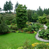 Деревья и кустарники в саду пейзажного стиля