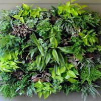 Живая композиция из зеленых растений