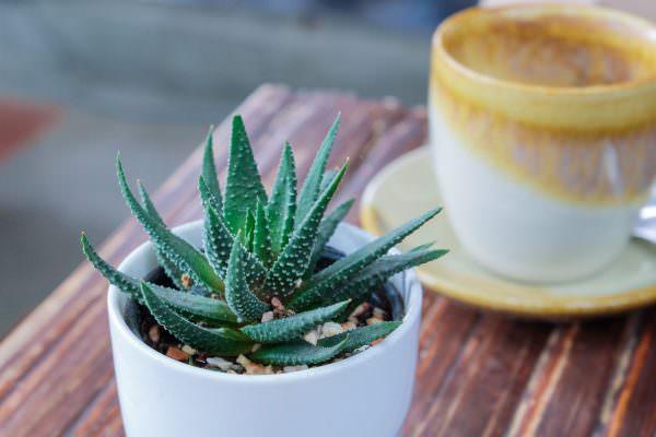 Алоэ - неприхотливое, но в тоже время атмосферное растение. Оно впишется в интерьер любой кухни