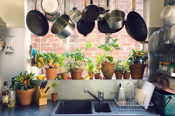 Выбирая растения для кухни, необходимо учитывть многие факторы