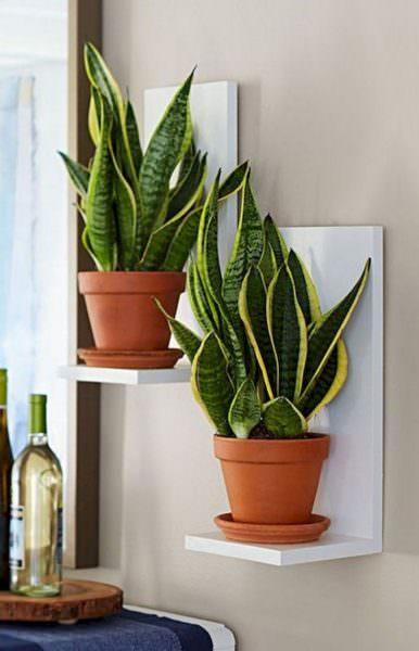 Красивое, неприхотливое растение. Разнообразит интерьер вашей кухни
