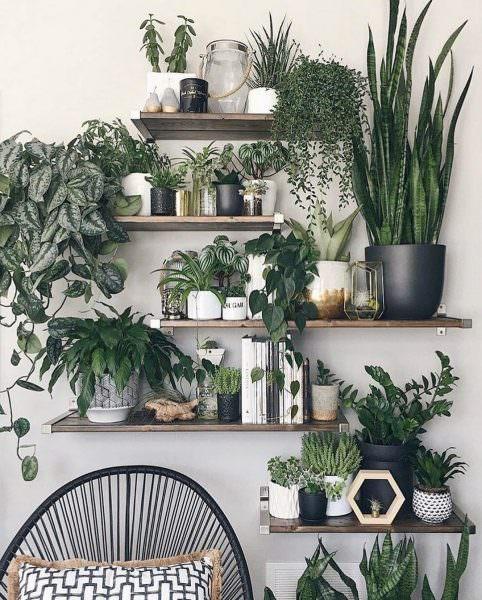 комнатные растения, подходящие для кухни, окна которой выходят на север, либо запад.