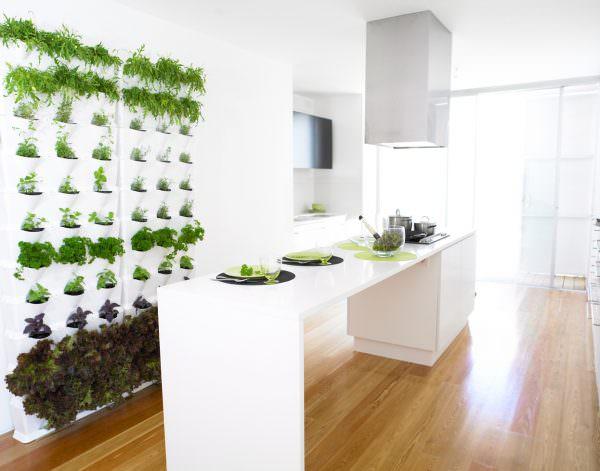 Эти растения очень освежают внешний вид кухни и успокаивают после трудового дня
