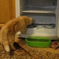 Накопление воды в холодильнике, морозильной камере под ящиками