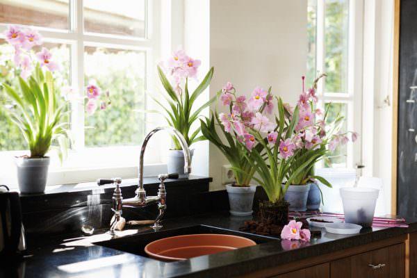 Живые горшечные растения следует размещать у окна.