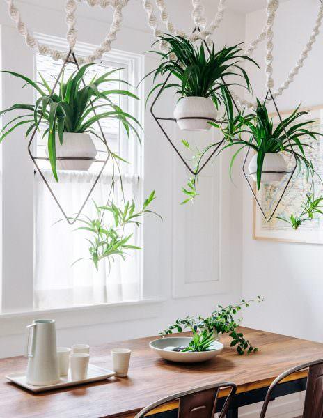 Цветы для кухни, размещенные по фен шуй могут добавить живости и улучшить энергию в комнате.